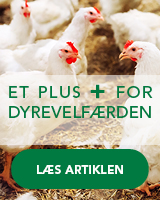 Et plus for dyrevelfæren